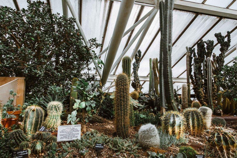 Barbican Conservatory-34.jpg
