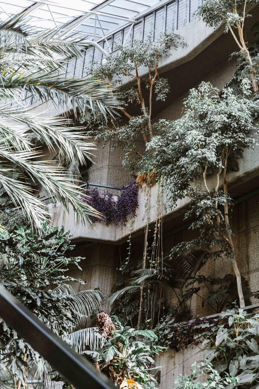 Barbican Conservatory-19.jpg