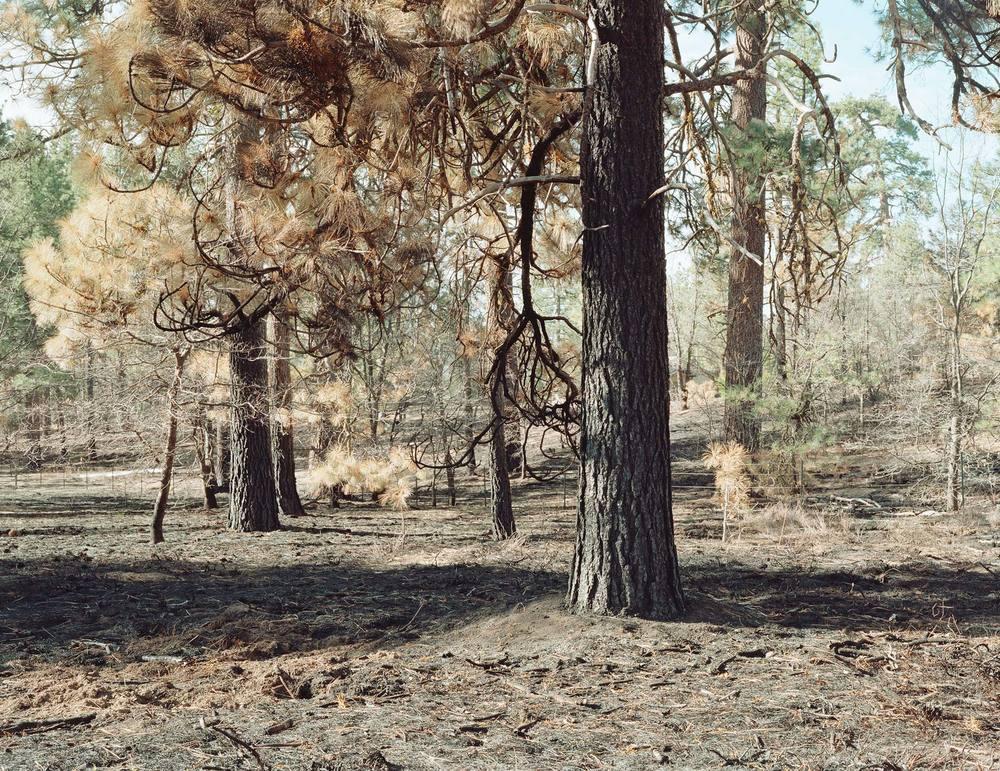 BURNED-FOREST-1.jpg