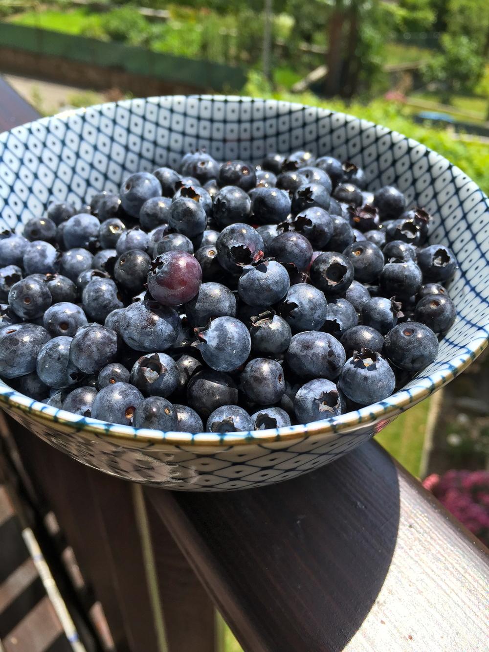 Super Blueberries