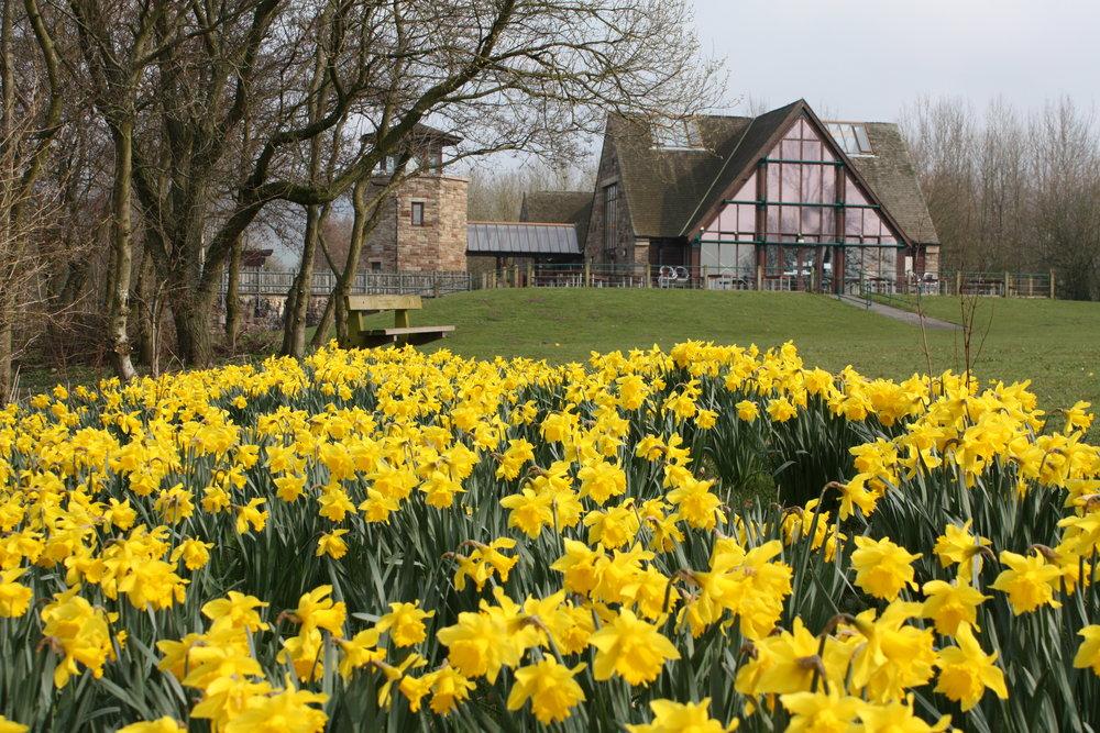 Daffodils and VC.JPG
