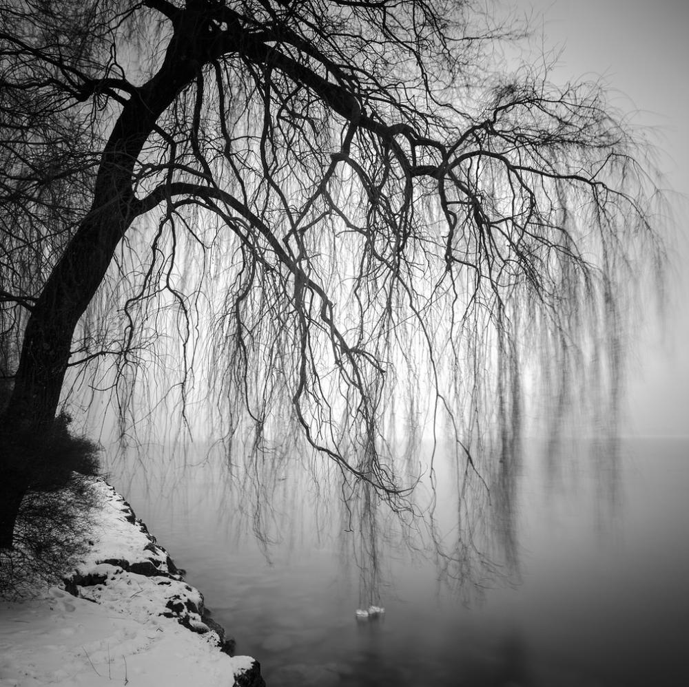 Desire -Gerald Arzt