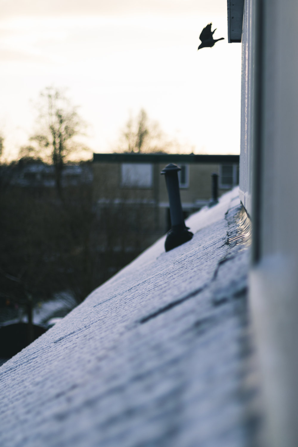 safely remove snow from your roof