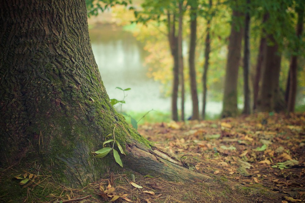 autumn-fall-forest-4700 (1).jpg