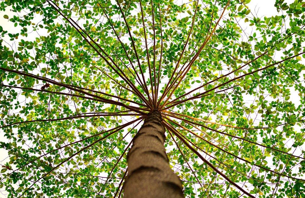 green-nature-tree-91153.jpg