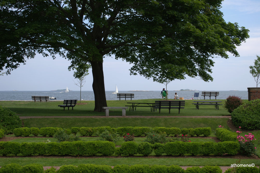 rose garden, lynch park, beverly