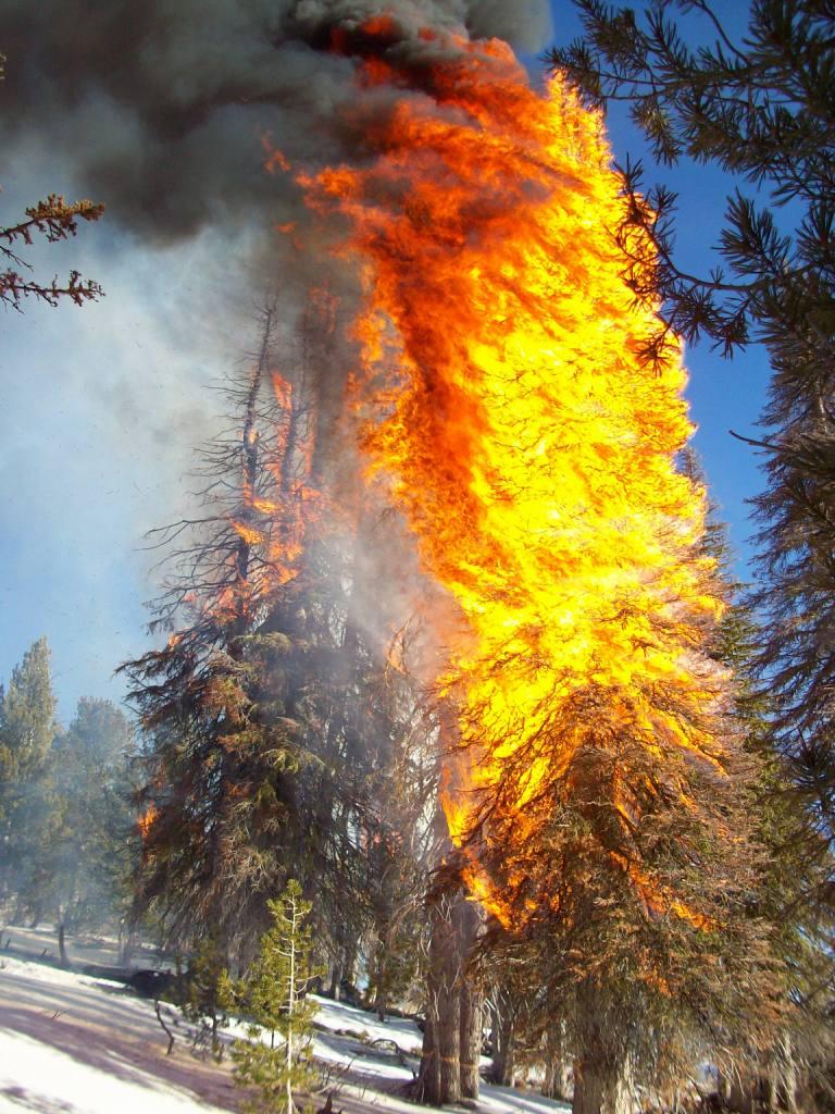 pine fire1