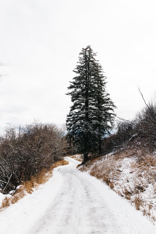 Colorado_2016-0061.jpg