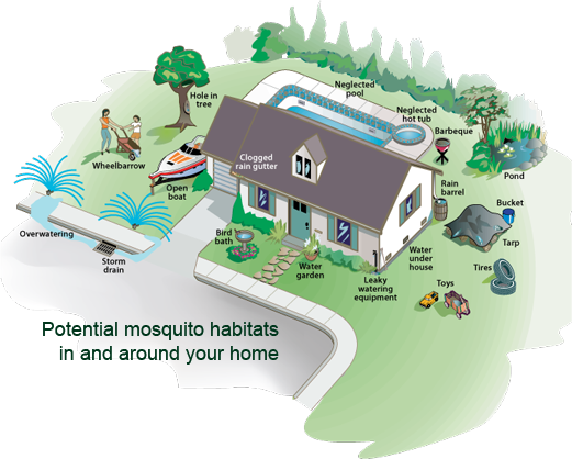 MOSQUITO HABITATS NEAR AND AROUND YOUR HOME