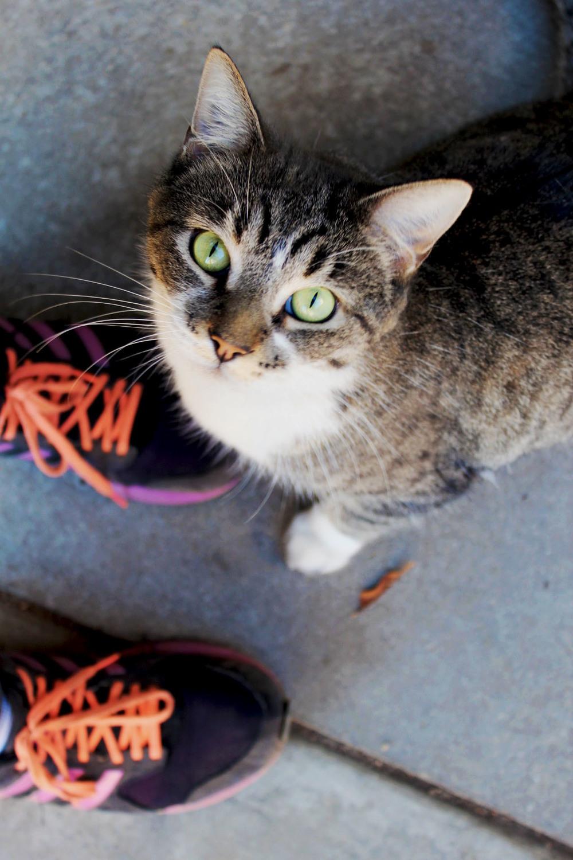 Here's me cat friend but I still miss Nimir.