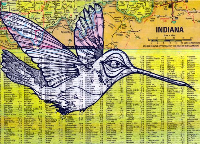 INDIANA HUMMINGBIRD - TODD KURNAT