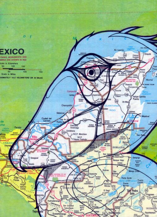 MEXICAN SHOEBILL - TODD KURNAT