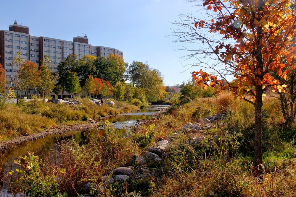 The restored Rippowam River meandering through Mill River Park in Downtown Stamford, CT.