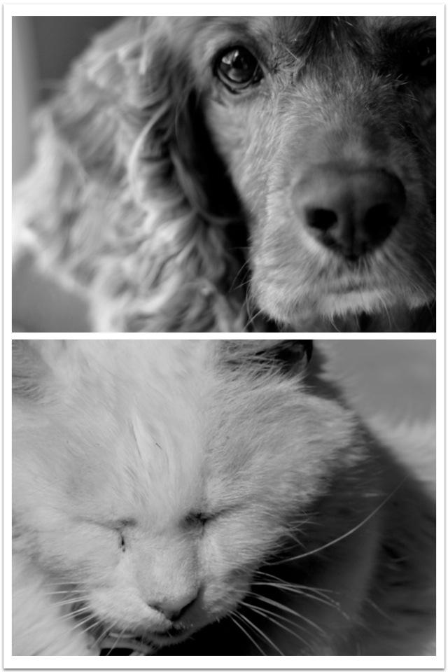 catsanddogs.jpg