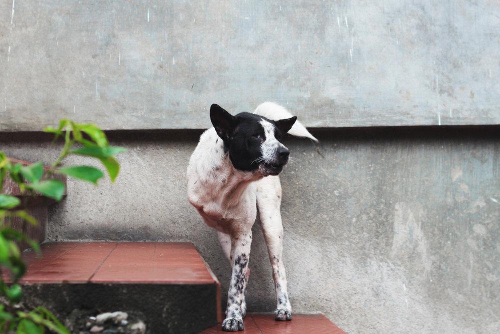 IMG_2401, bali, animal.jpg