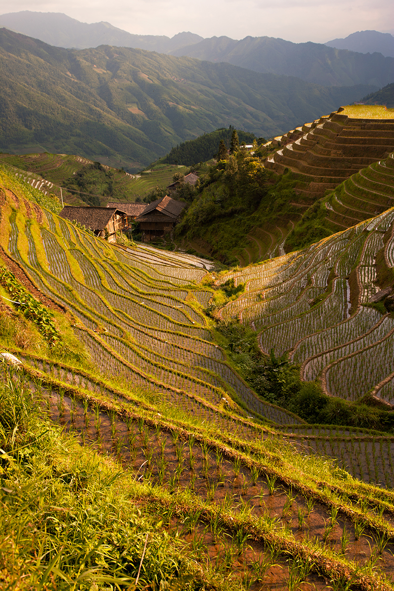 Longji Rice Terraces Small.jpg