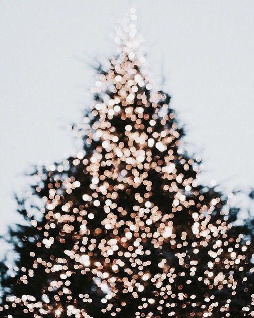 Photo Dec 19, 8 49 14 AM.jpg