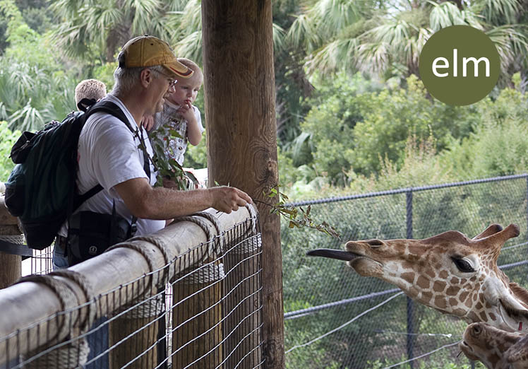 ELM-West-Seattle-Jacksonville-Zoo-giraffee-habitat.jpg