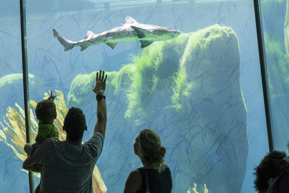 San Diego Zoo Africa Rocks Exhibit Earns Local Design Award