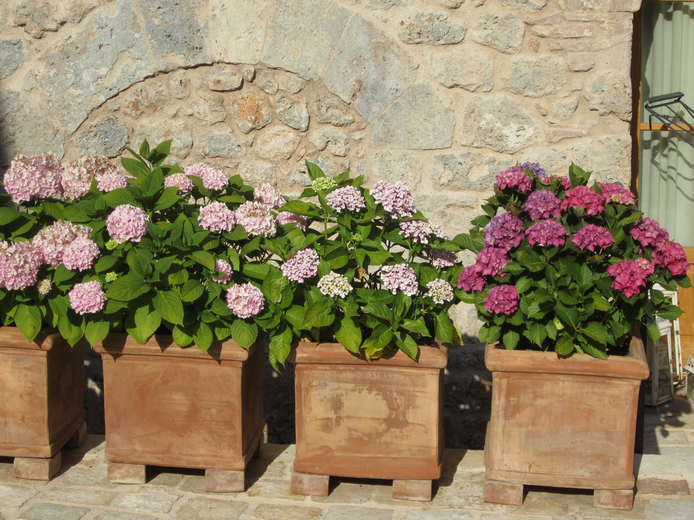 pretty potted flowers in Tuscany