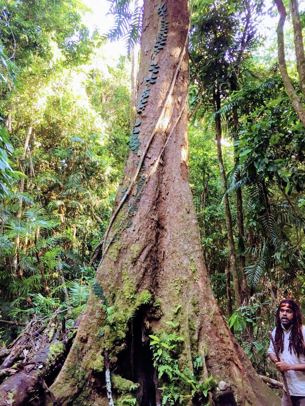 Moss Man Gorge near Port Douglas