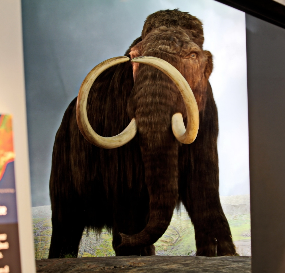 Mammoth reflection in display glass in Ice Age Exhibit
