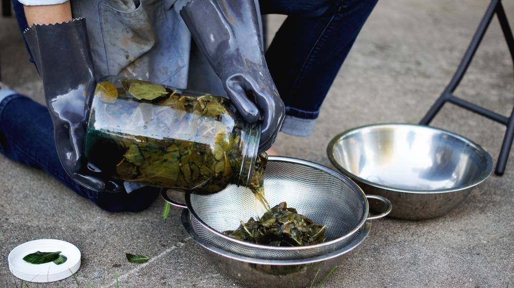Draining Indigo Brew