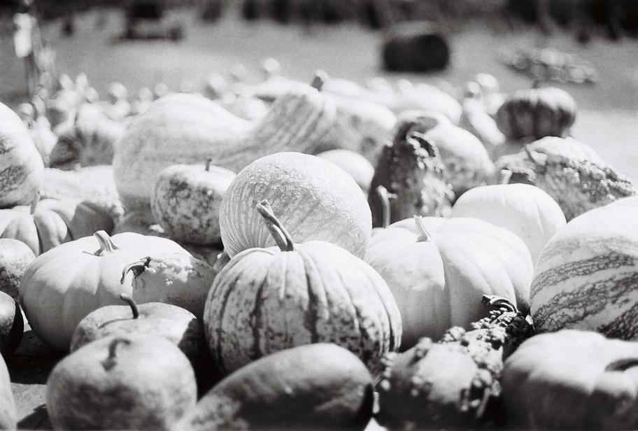 Annapowellteeter_Pumpkin01