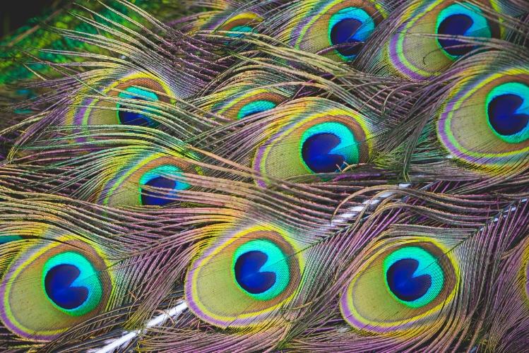 picjumbo.com_HNCK6973.jpg