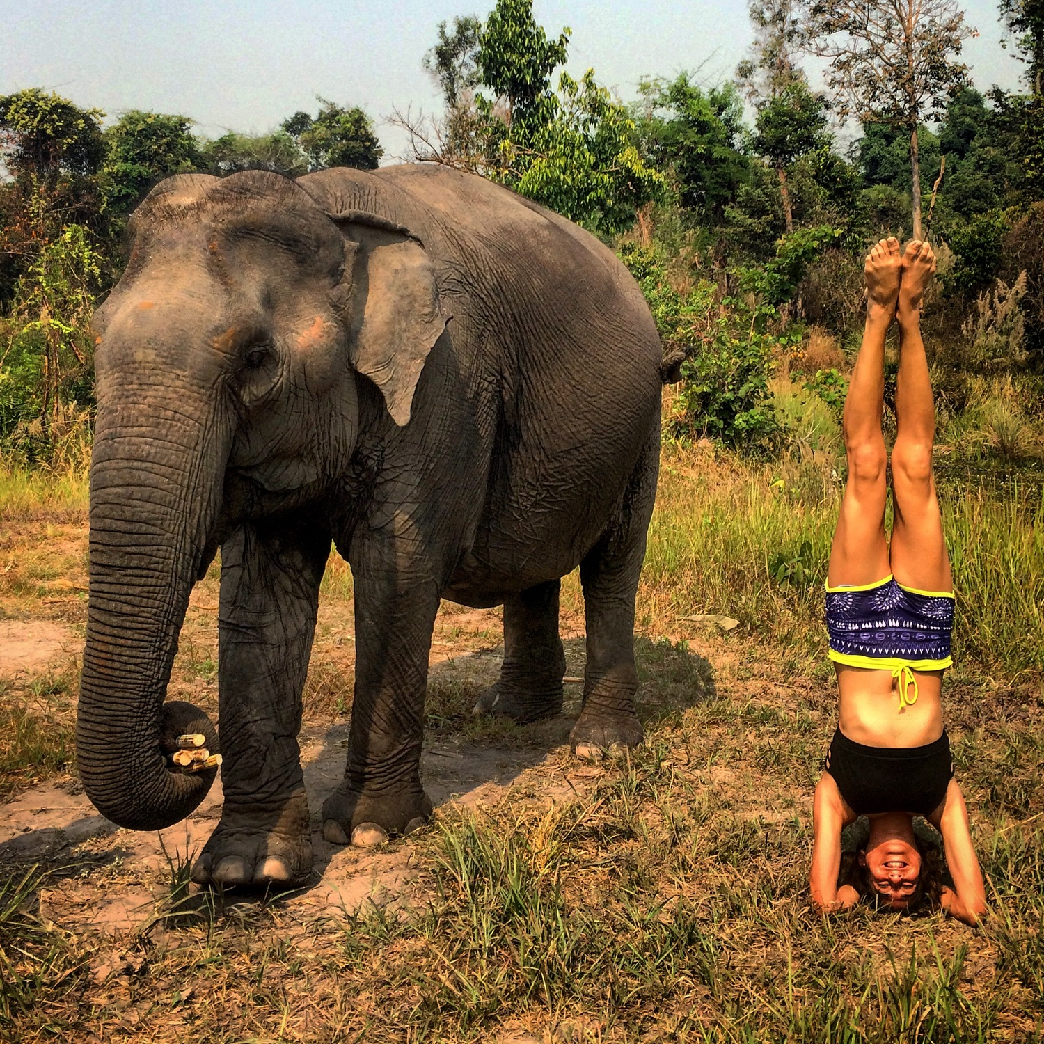 Travel Diary Days 36 - 40: Elephant Nature Park in Cambodia (Video)