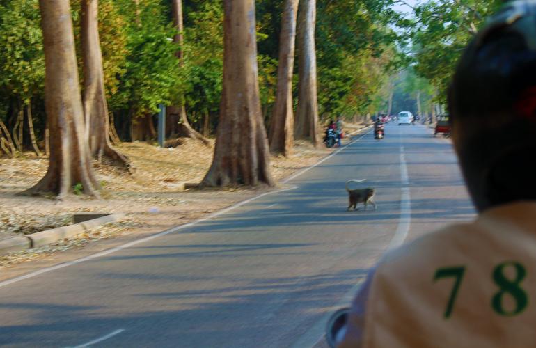 Monkey in the Street