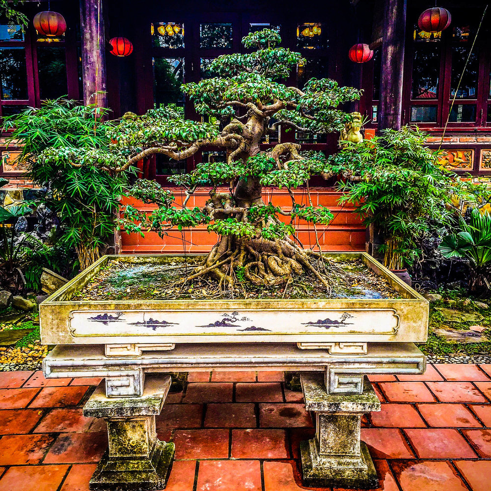 Copy of Bonsai tree