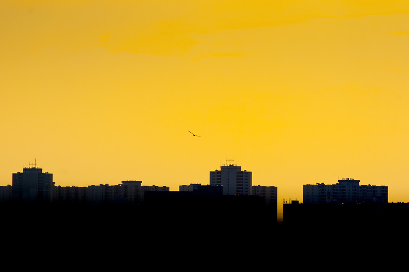 Sunset over Dixon