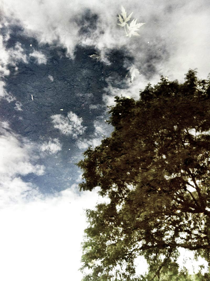 Trees and Sky Reflected shot by Dennis Marciniak of denMAR Photograph in 2012 on an iPhone 4