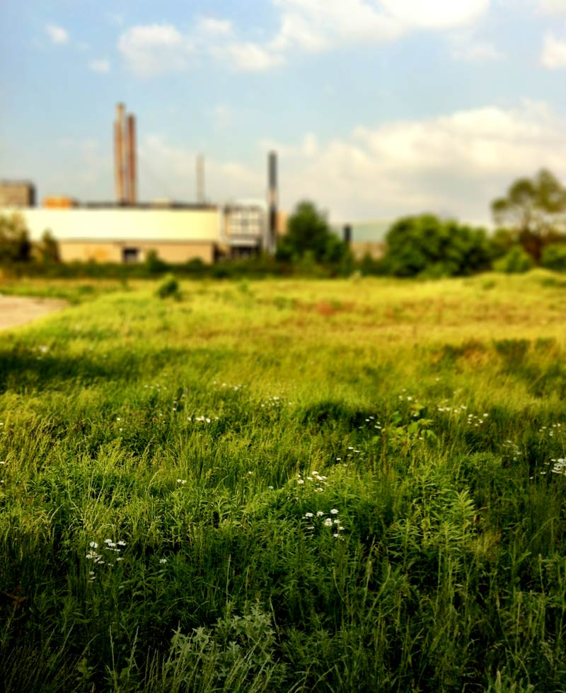 A factory and some bush in Toronto shot on the iPhone 4