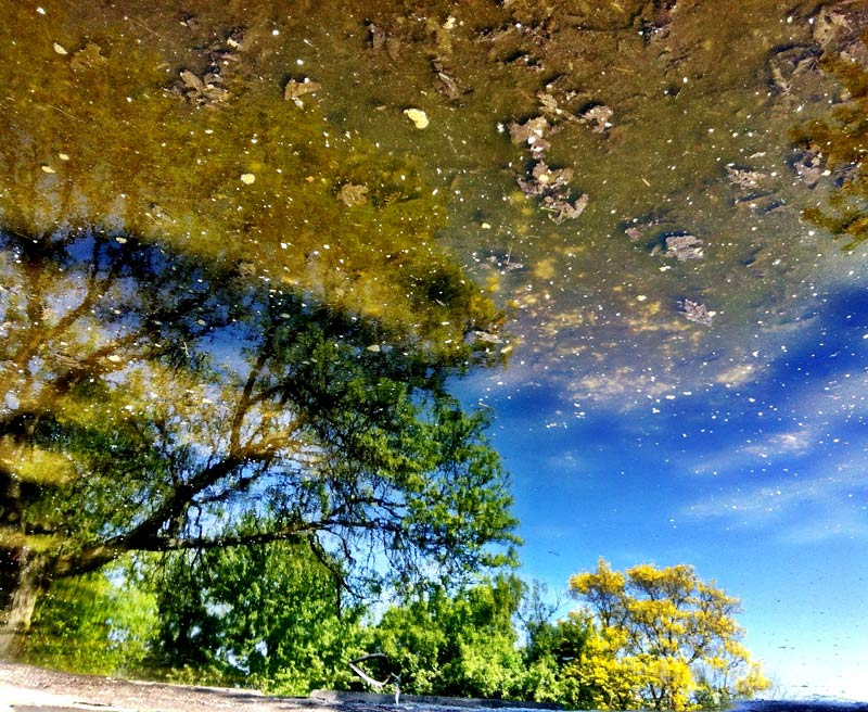 A reflection of trees off a puddle shot by Dennis Marciniak of denMAR Photography