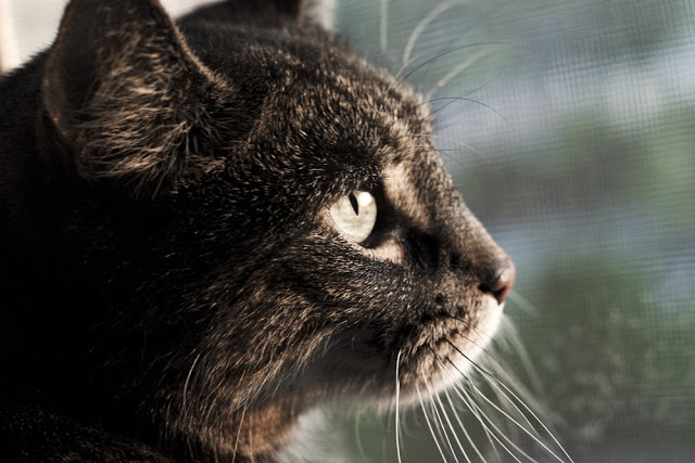 A cat looking out the window during a sunset.