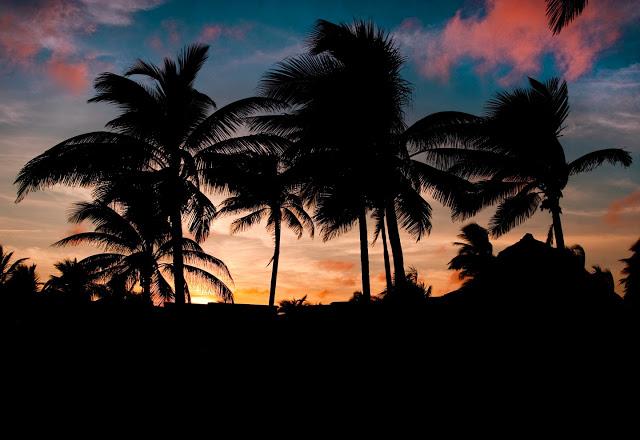 Cuba Palm Tree Desktop Background or Wallpaper