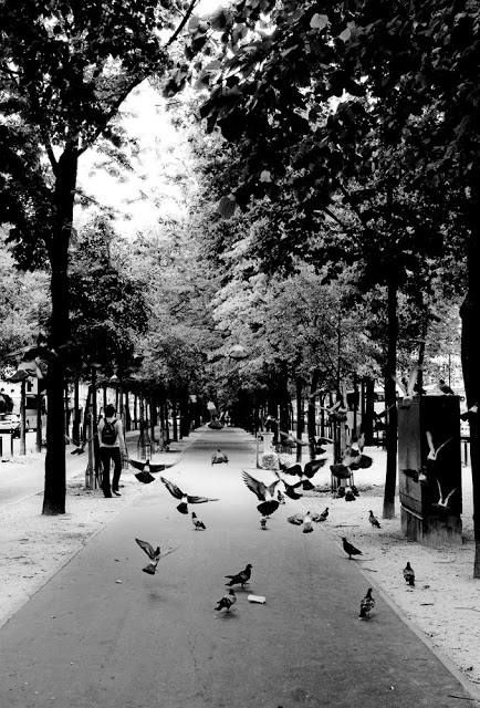 A bunch of pigeons flying away in Paris.