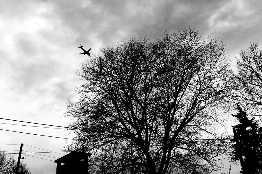 An airplane flying over a tree on its way to Toronto's Pearson International Airport