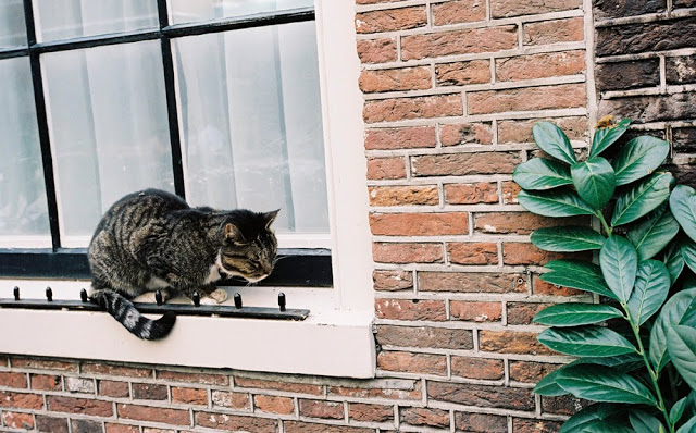 A street cat in Amsterdam that is sick