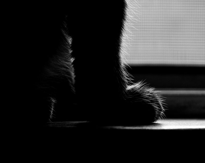 Lucifur's Paw in the window