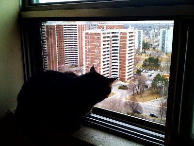 Lucifur keeps an eye out the window looking at Richview Road.