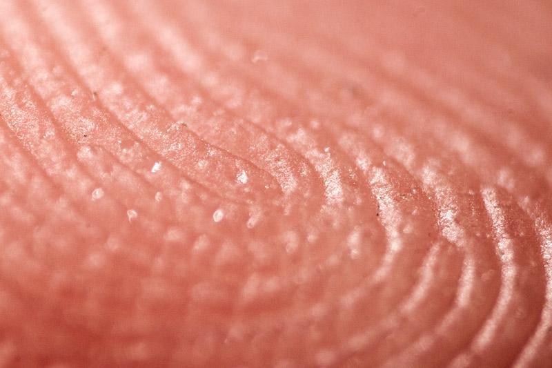 An extreme closeup of a finger print