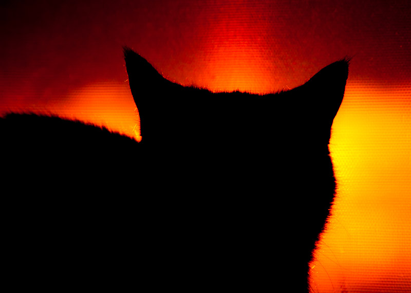 A cat sitting in a red light