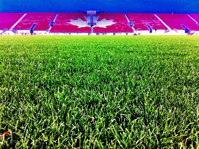 The Grass at BMO field where Toronto plays shot by Dennis Marciniak of denMAR Photography