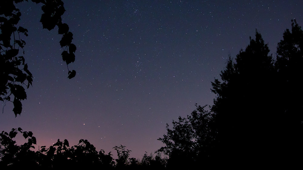 Stars in the night sky being framed by trees on a moonless night in Southern Ontario. Image by Dennis Marciniak of denMAR Media.