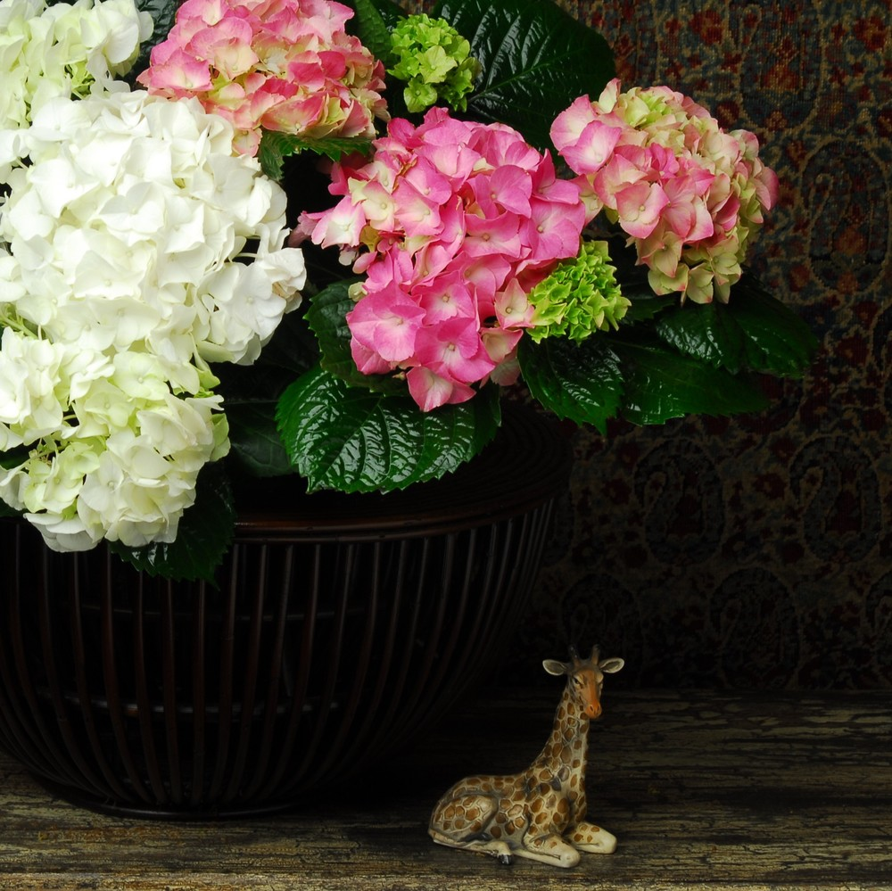 Pink and white Hydrangea in a unique wood vessel