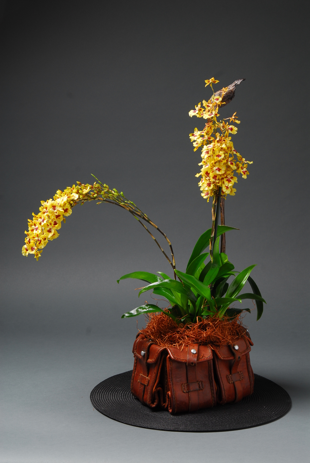 Dutch leather belt with triple stem yellow orchid
