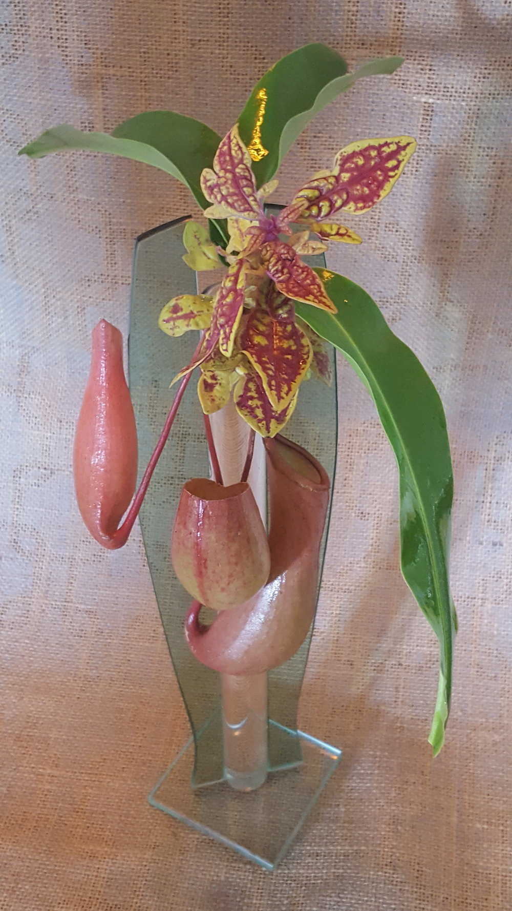 Dual stem pink orchid in dark round wood vase